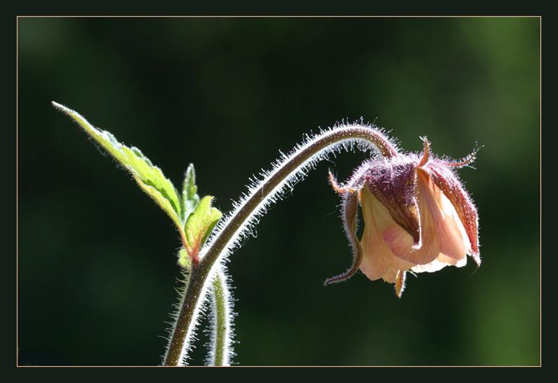 Leben einer Blume