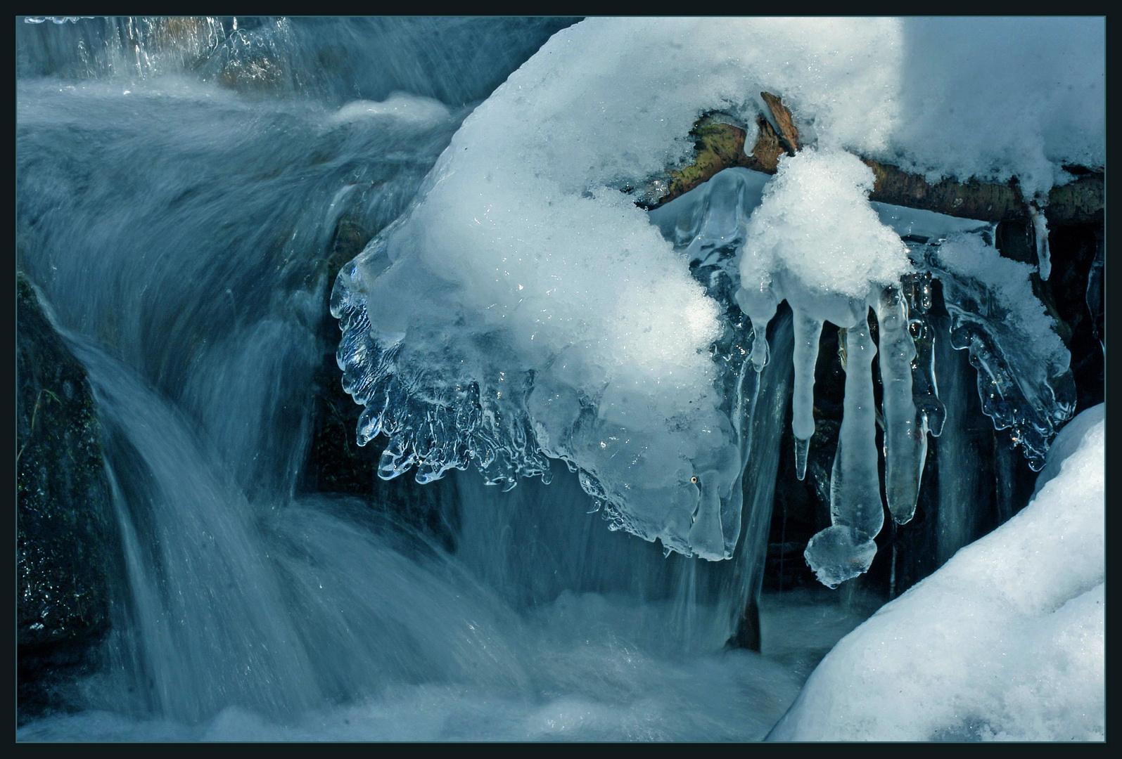 Leben im Eis ?