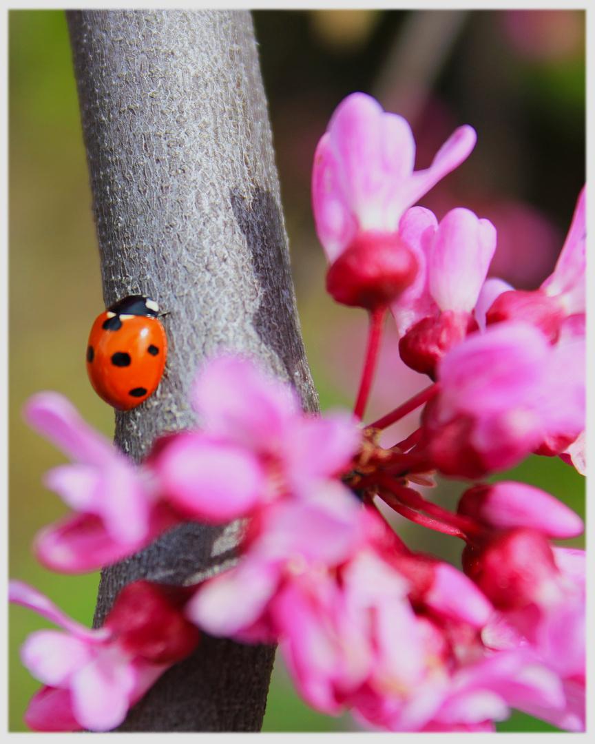 Leben im Garten