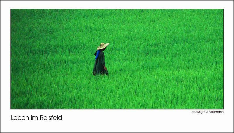 Leben im Reisfeld