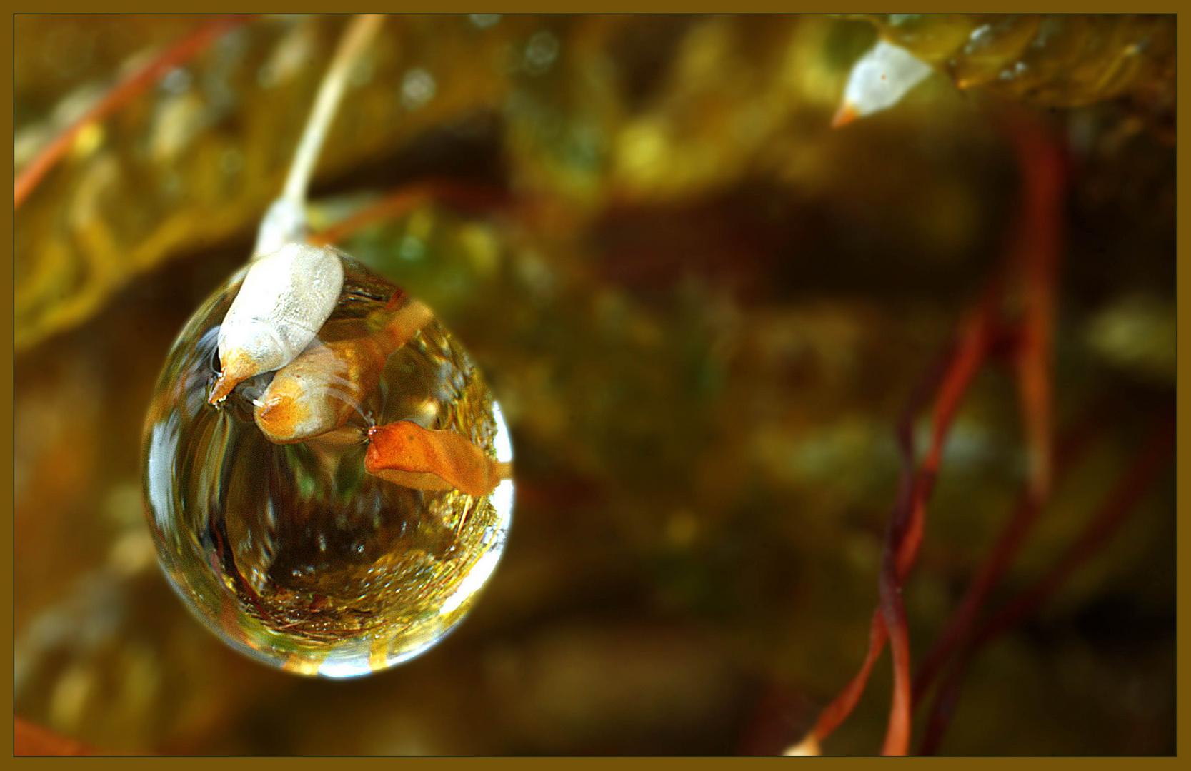 Leben im Wasser