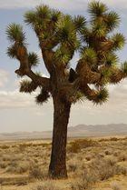 Leben in der Wüste (Auf dem Weg richtung Route 66)