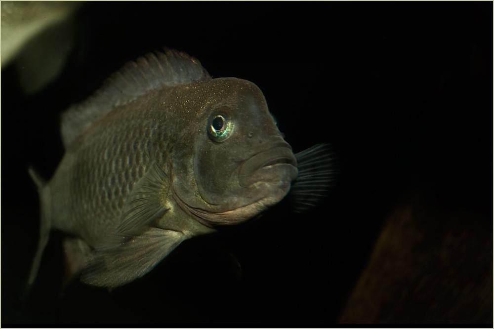 Leben in meinem Aquarium (1)