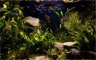 Leben in meinem Aquarium (10)