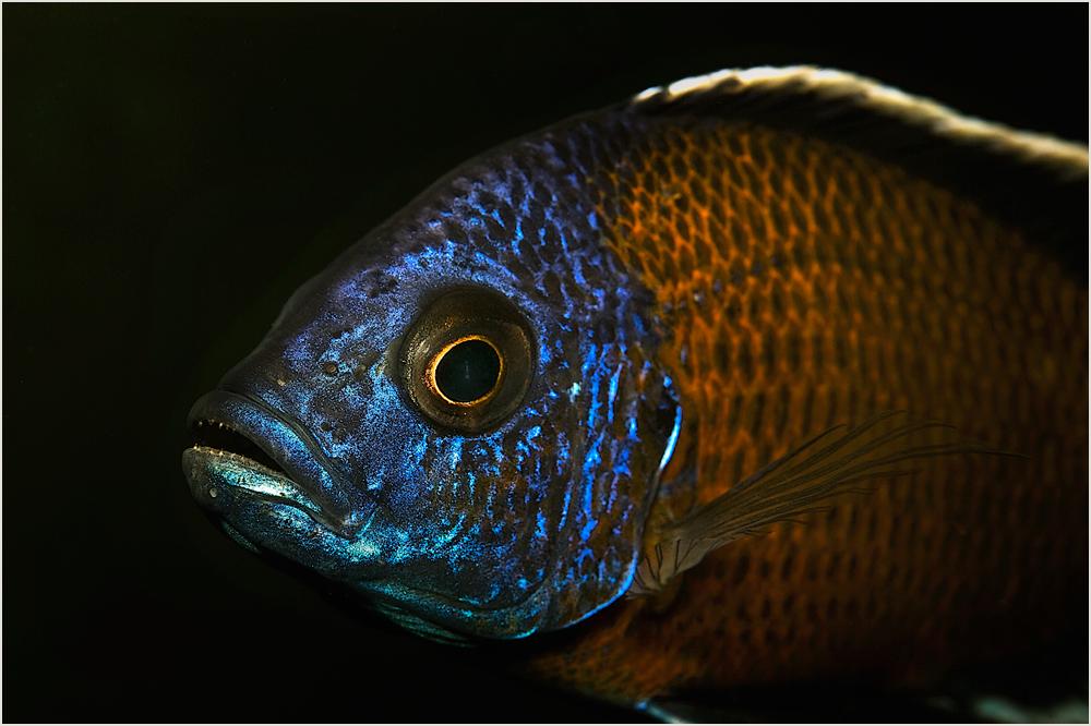 Leben in meinem Aquarium (3)