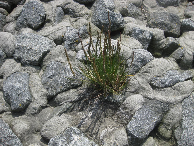 Leben inmitten dieser Steinwelt