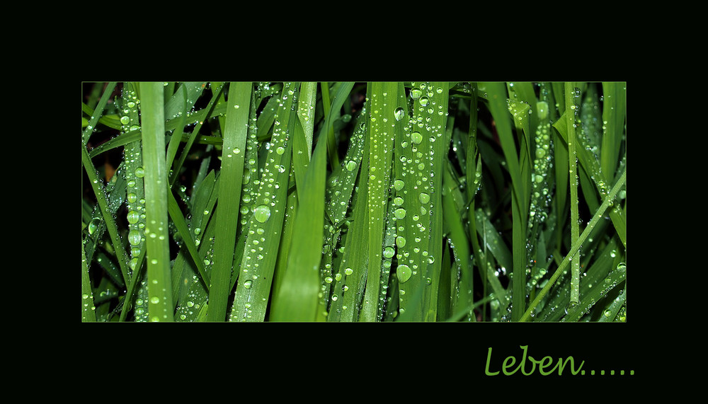 Leben ist grün....