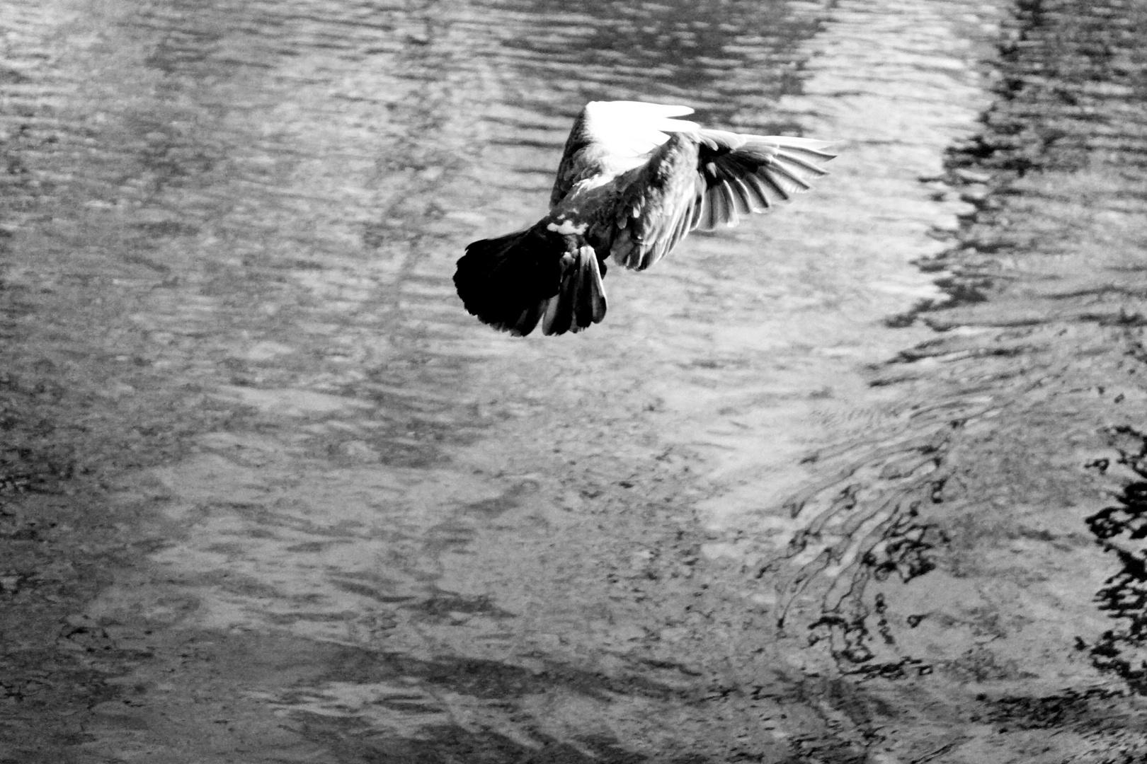 """""""Leben ist wie Wind auf den Flügel tragen"""""""