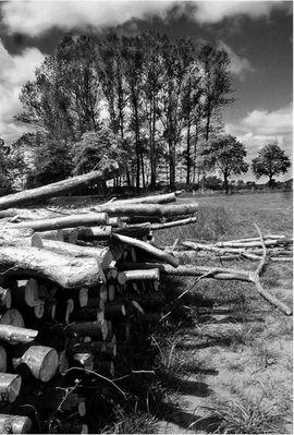 Leben und Sterben aus der Sicht der Bäume