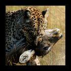 Leben und Tod in der Wildnis