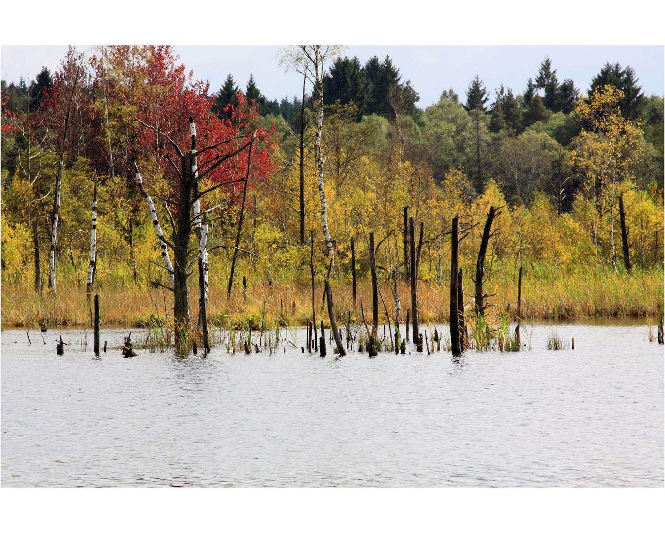 Leben und Tod, Quellmoor für den Neckar