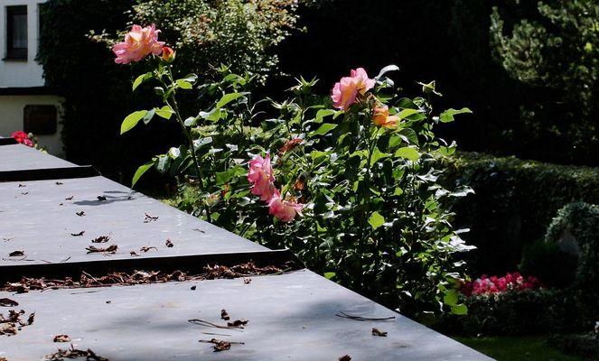 Leben&Danach&Blumen