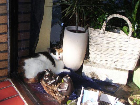 lebendige Schaufensterdeko - Katze nistet sich ins Sonnenfenster ein