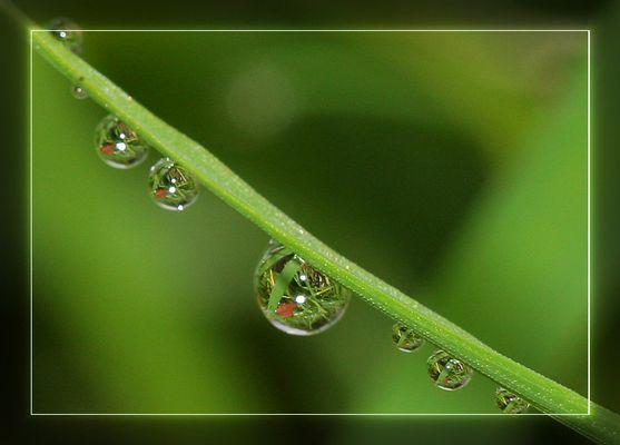 Lebendige Wassertropfen