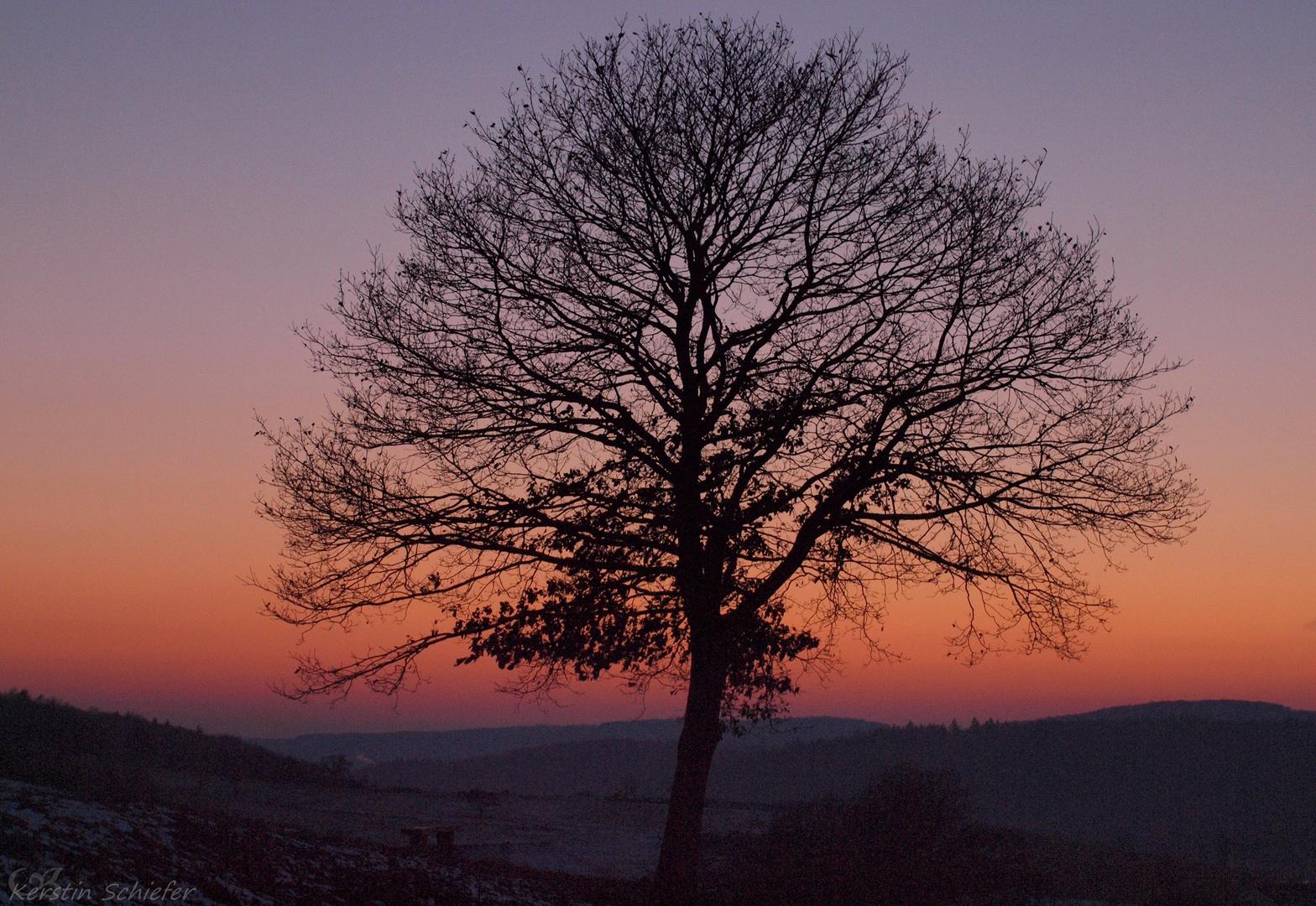 Lebensbaum beim Sonnenuntergang