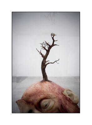 Lebensbaum°