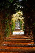 Lebensbaumallee auf dem Unterrather Friedhof