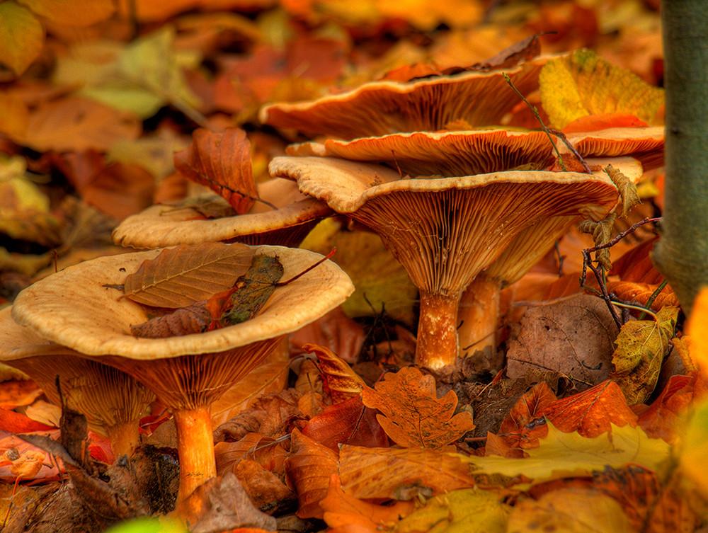 Lebenskraft aus dem Herbstboden
