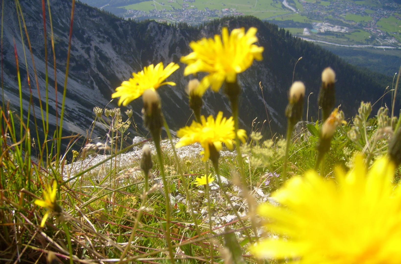 Lebensräume im Karwendel bei Krün