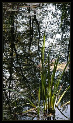 Lebensraum der Hommingberger Gepardenforelle