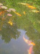 Lebensraum für Fische