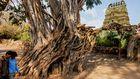 Lebensraum mit Tempel in Mysore, Indien