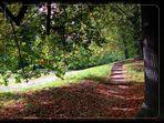Lebenswege ... im Herbst