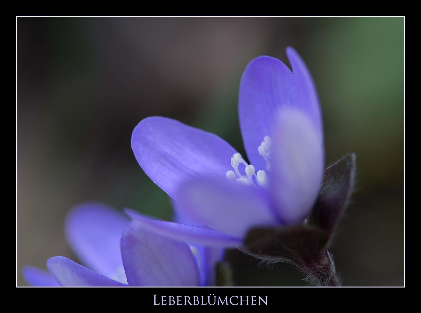 Leber - Blümchen