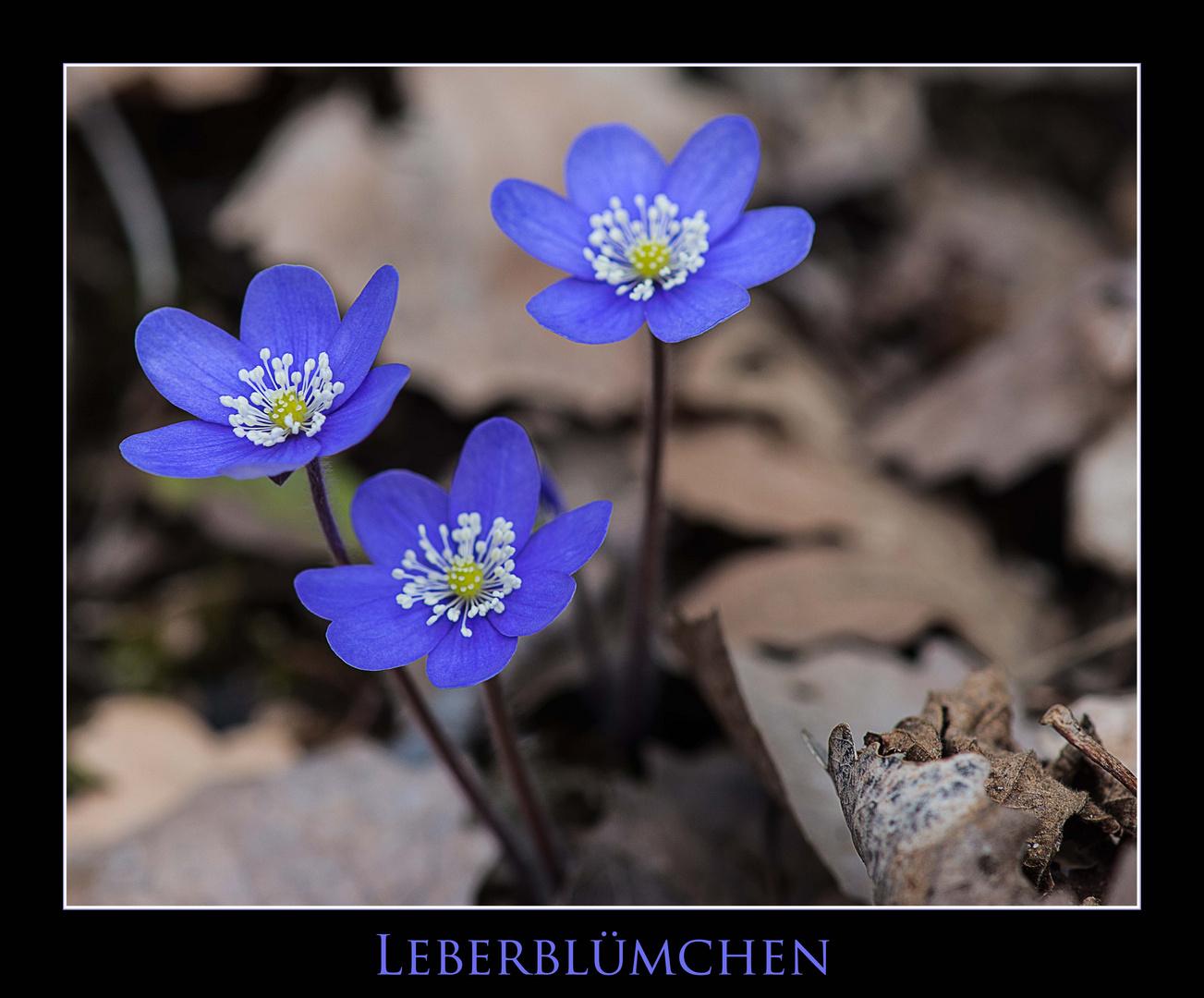 Leber - Blümchen II