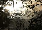 L'échos de L'étang
