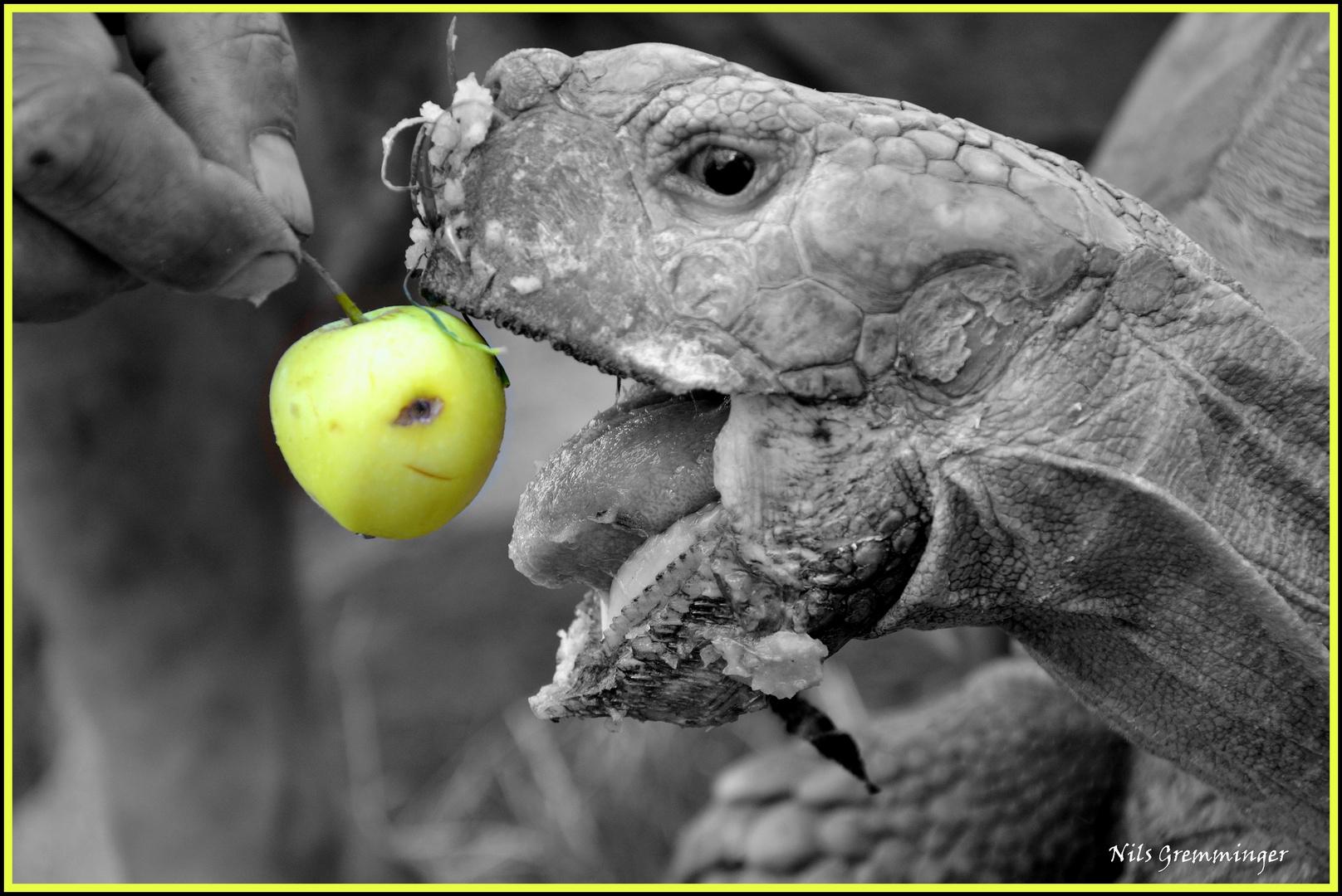 Lecker, Äpfel...