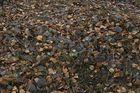 lecker Herbst