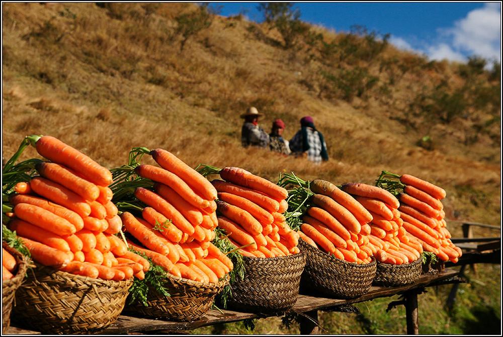 Lecker Karotten ...