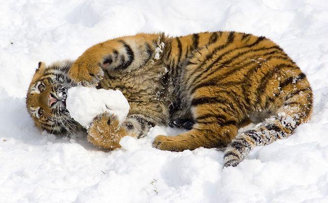 Lecker Schnee!