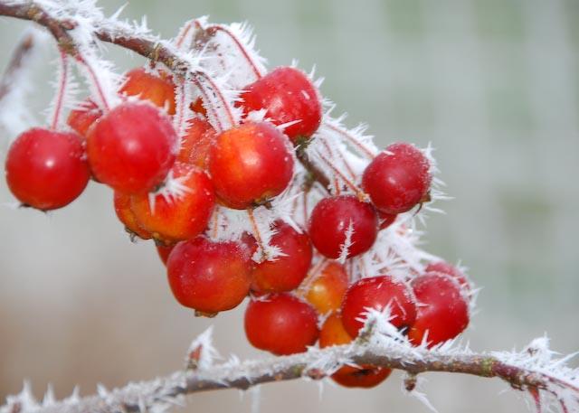 Lecker Wildäpfel