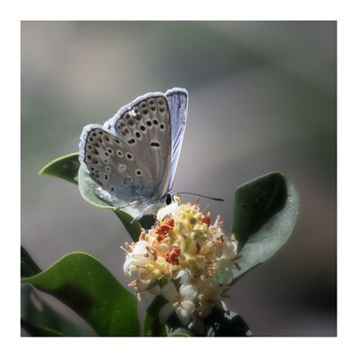 Léger comme un papillon