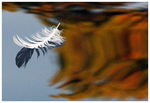 légère comme une plume....