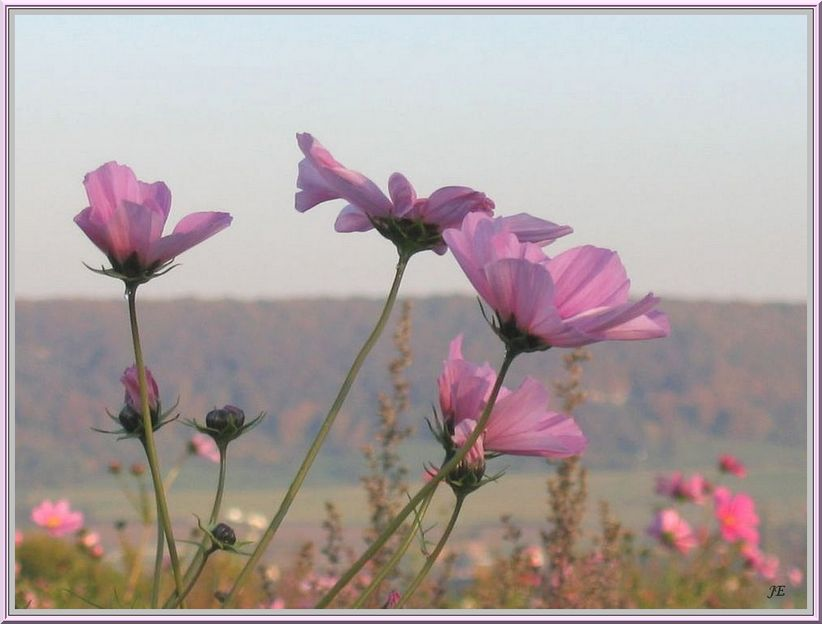 Légèreté florale