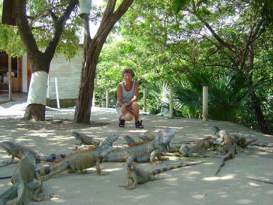 Leguan Farm auf der Insel Roatan