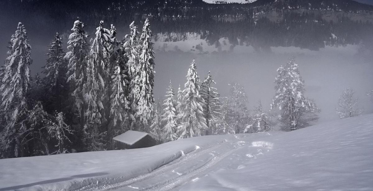 leicht im Nebel