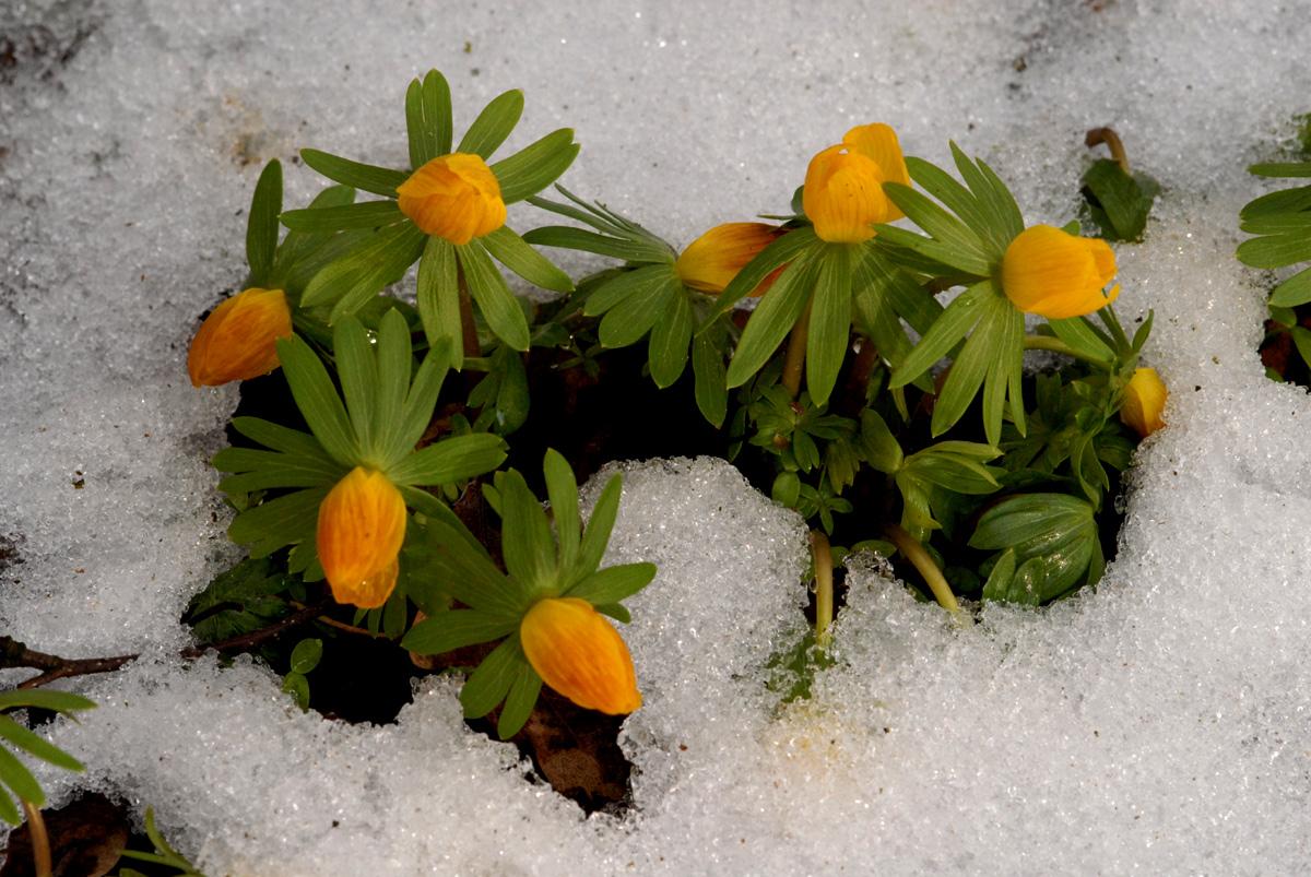 Leichte Hoffnung auf Frühling