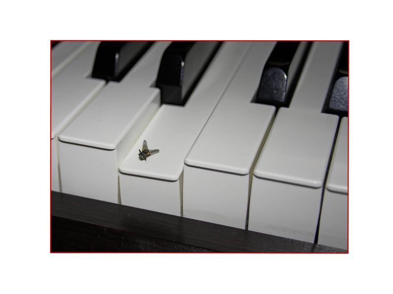 leichte musik