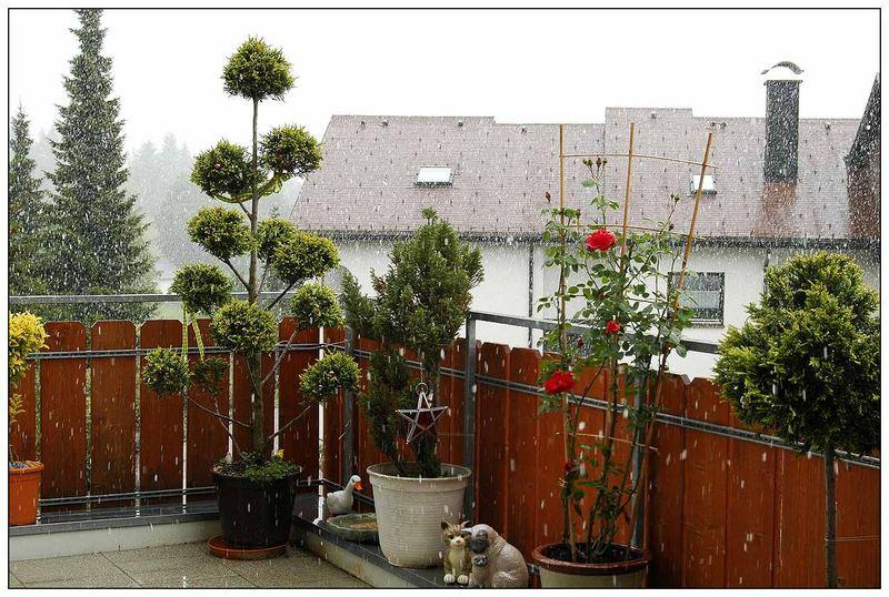 leichter schneefall mit balkonpflanzen foto bild. Black Bedroom Furniture Sets. Home Design Ideas
