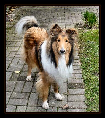 Leider gehört diese hübscher Hund nicht mir,