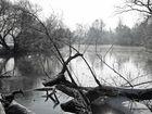 Leine bei Neustadt/Rbge bei Hochwasser