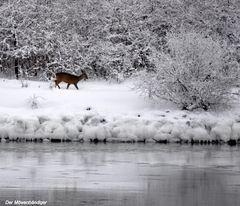 Leise pieselt das Reh, gelbe Spuarn in den Schnee und die vielen kleinen Engels
