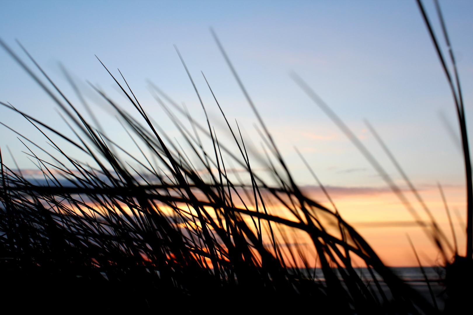 Leise rauscht das Meer hinter den Dünen