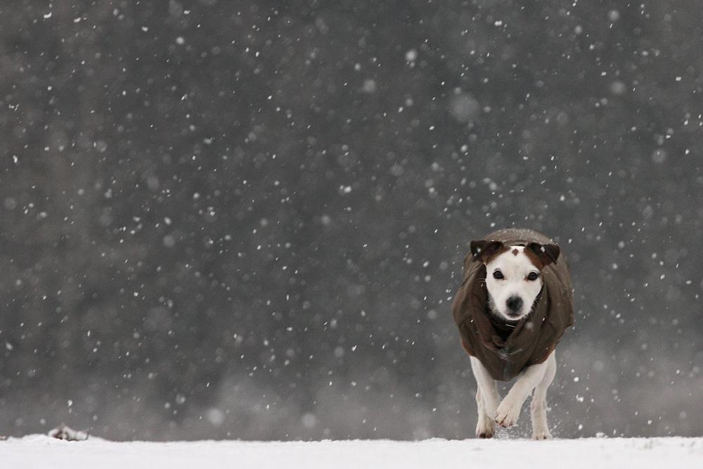 Leise rieselt der Schnee......