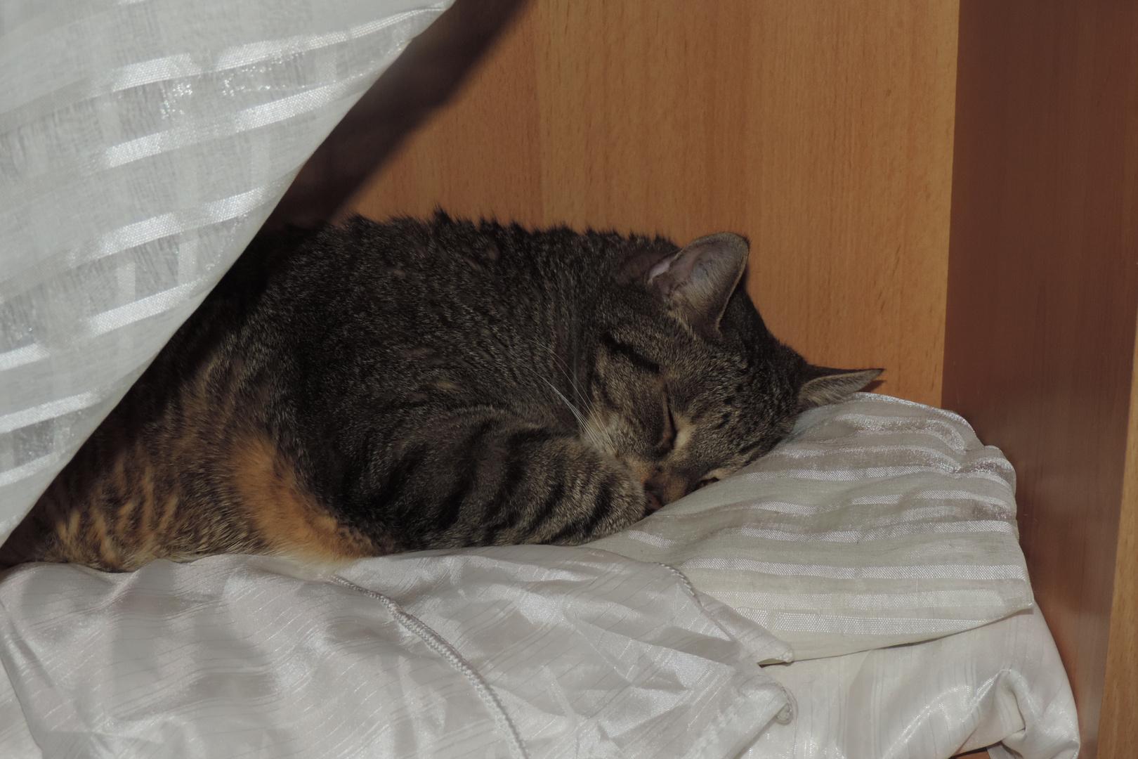 Leise Spocky schläft