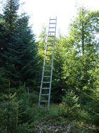 Leiter im Wald